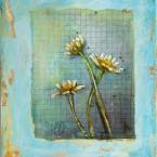 081_daisy